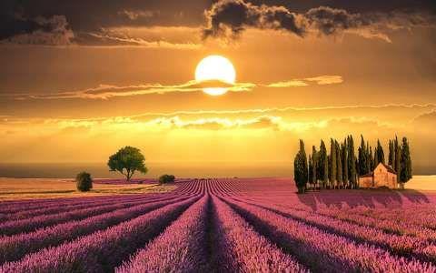 Levendulamező, naplemente, fa, ház, Toszkána