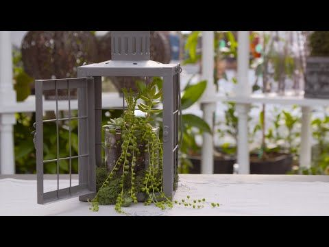 This week Tamara shows us how to turn a lantern into a terrarium! We think it makes for a perfect green centerpiece!