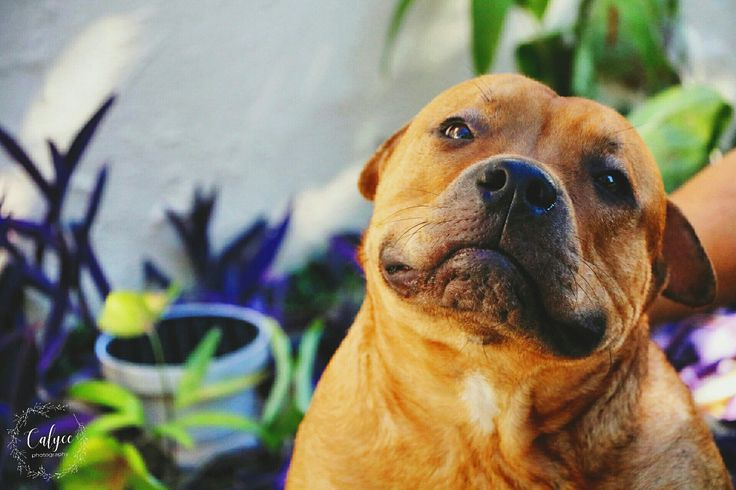 Animal Photography- Dog by Calycephotography