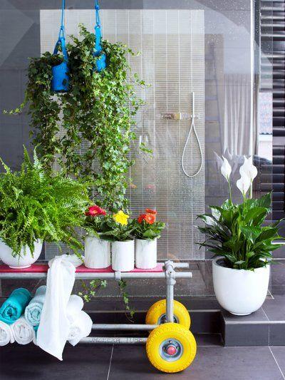 Zimmerpflanze Für Badezimmer | 84 Best Luftreinigende Pflanzen Images On Pinterest Air Filter