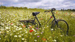 Gras, Rostig, Fahrrad, Feld, Ebene, Blume, Kamille, Maki, Horizont, Himmel, Wolken