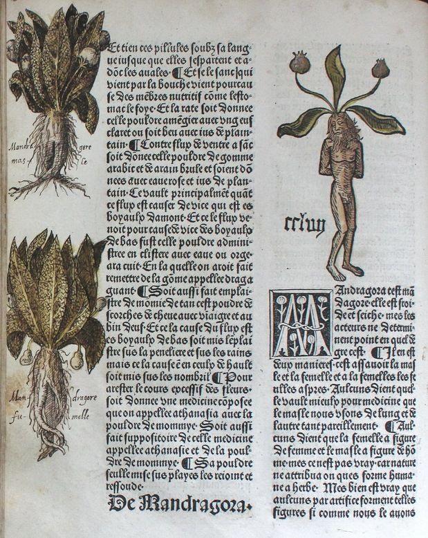 Arbolayre contenant la qualitey et virtus… Lyon, 1485. Pharmacie RES 5773. - See more at: http://www2.biusante.parisdescartes.fr/wordpress/index.php/biu-sante-moyen-age/#sthash.cEMhbW9v.dpuf