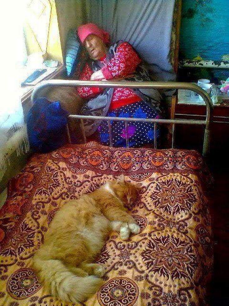 fluffy cat, and babushka, napping :))