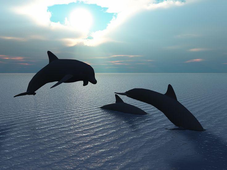 Cheap Dolphin Tours In Panama City Beach