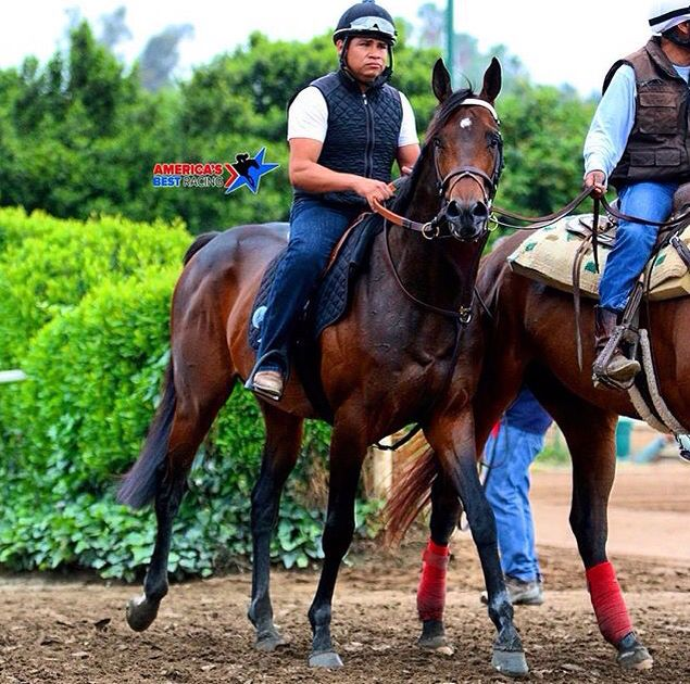 60 Best Exaggerator Images On Pinterest Horse Horses