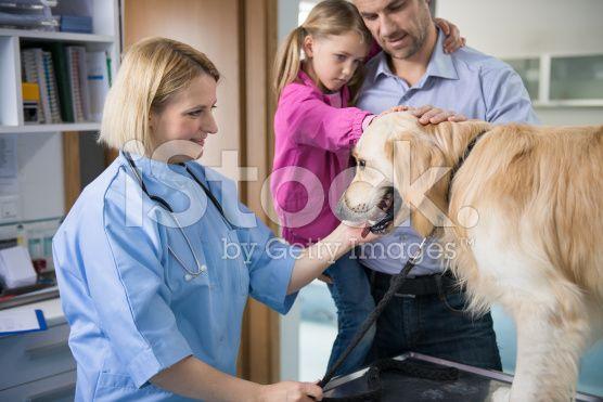 Vet с собака и Владелец – роялти-фри стоковая фотография
