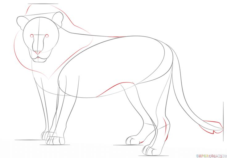 how to draw a lion step by step for beginners