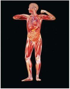 Celiac Artery Stenosis Symptoms