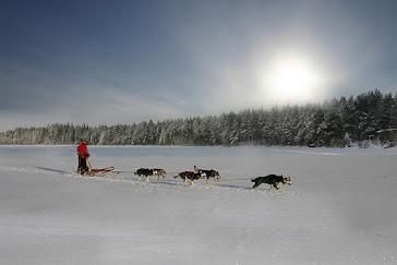 Husky safari, Rovaniemi, Lapland, Finland