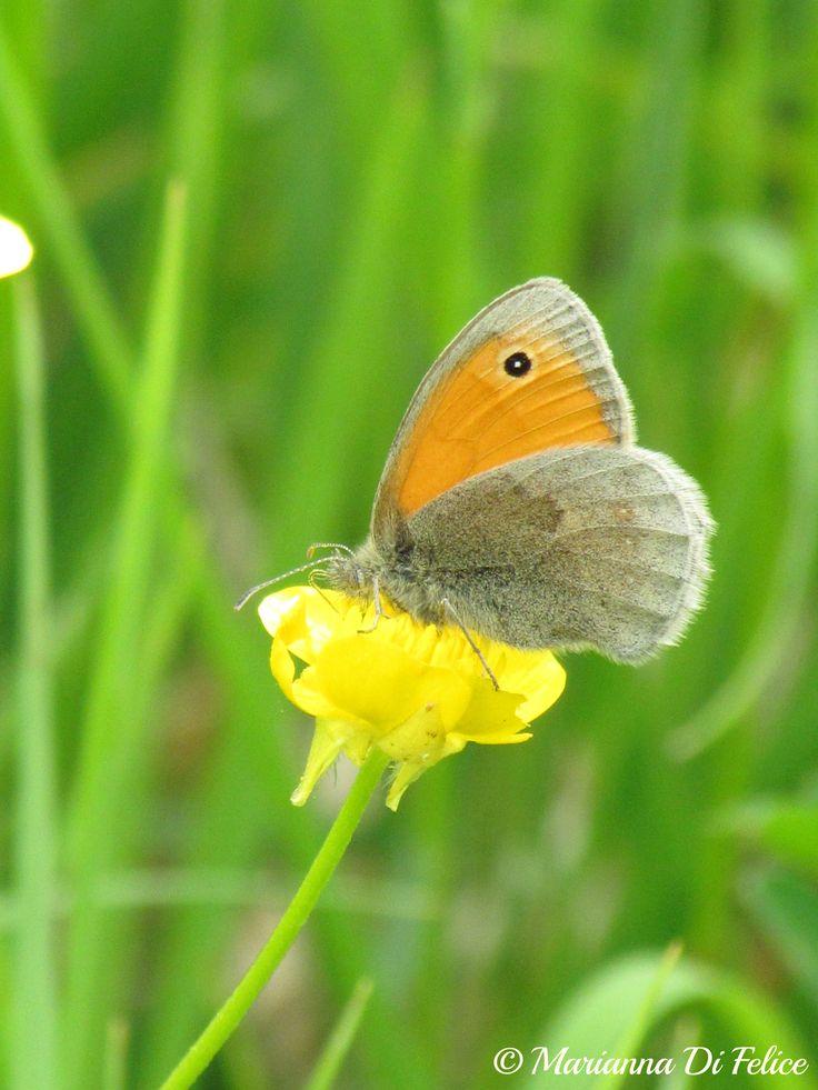Butterfly on flower Parco Nazionale della Maiella