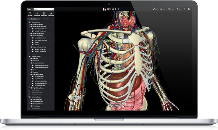 BioDigital: 3D Human Visualization Platform for Anatomy and Disease