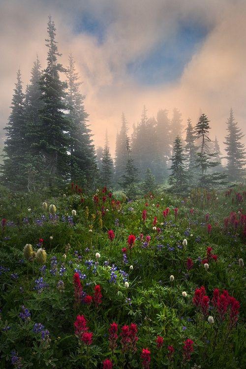 Her own hideaway||| Mt. Rainier NP, Washington Perri Schelat