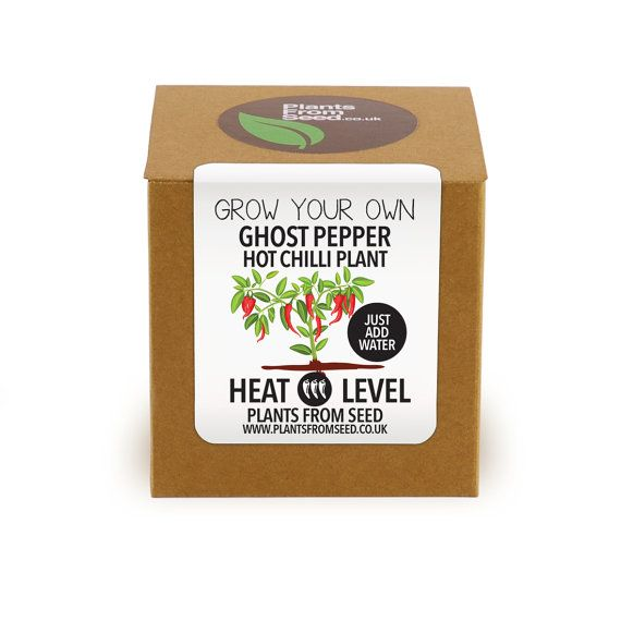 Grow Your Own Ghost Pepper Chilli Plant Kit by PlantsFromSeed