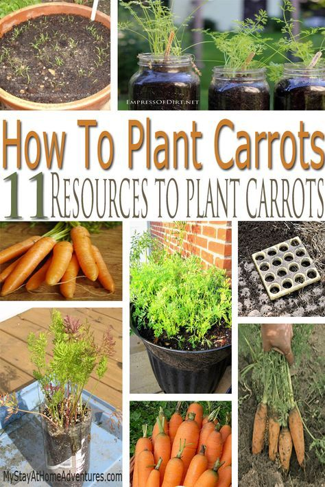 Learn how to plant carrots and the greatest resources on how to plant carrots. From soda bottles to mason jars find them all here.