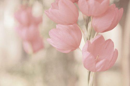 softest pink~