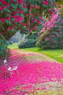 Garden Bench ~ Cornwall, Engand ✿⊱╮