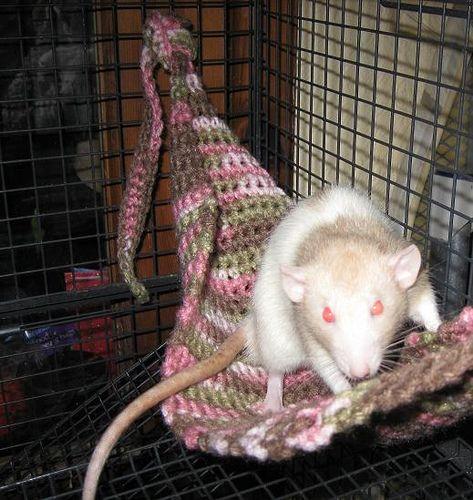 Rat Hammock | Free Pattern