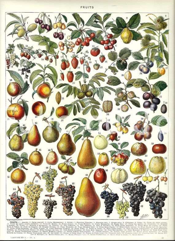 """FRUITS - Vintage French Dictionary Color Illustration - 1930 9"""" x 12"""". $24.00, via Etsy."""