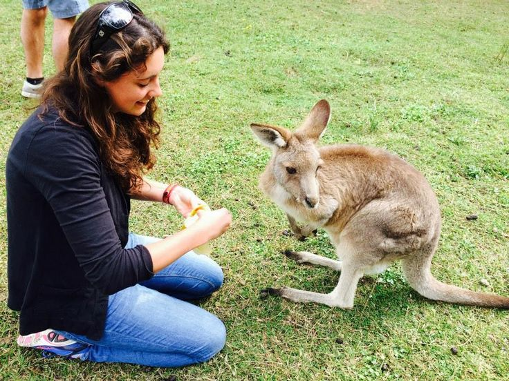 Blog post from UEA on the Road, about studying at the University of Sydney.