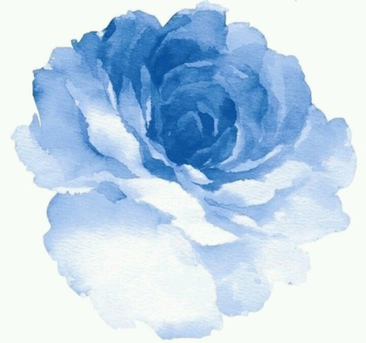 Gallery For gt Watercolor Rose Blue