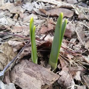 Signs of Life | by Catherine McNiel