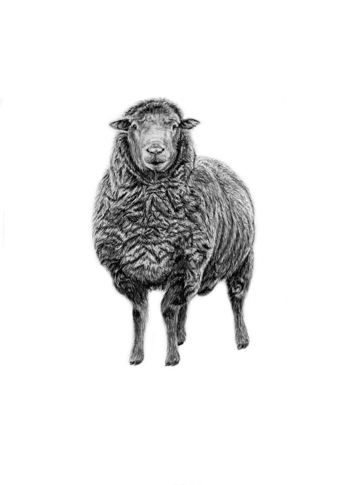 INK sheep Sheep prints, Sheep art, Interior design animals