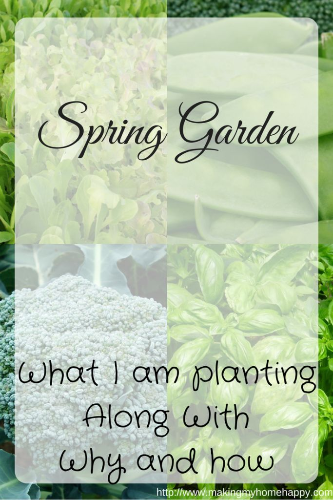 I know it's the end of February, and for most of us, spring is probably a month or two away still. However, this doesn't mean that you shouldn't start planning your spring garden. There are many things you can do now to prepare and get ahead of schedule for the warm weather that will be …