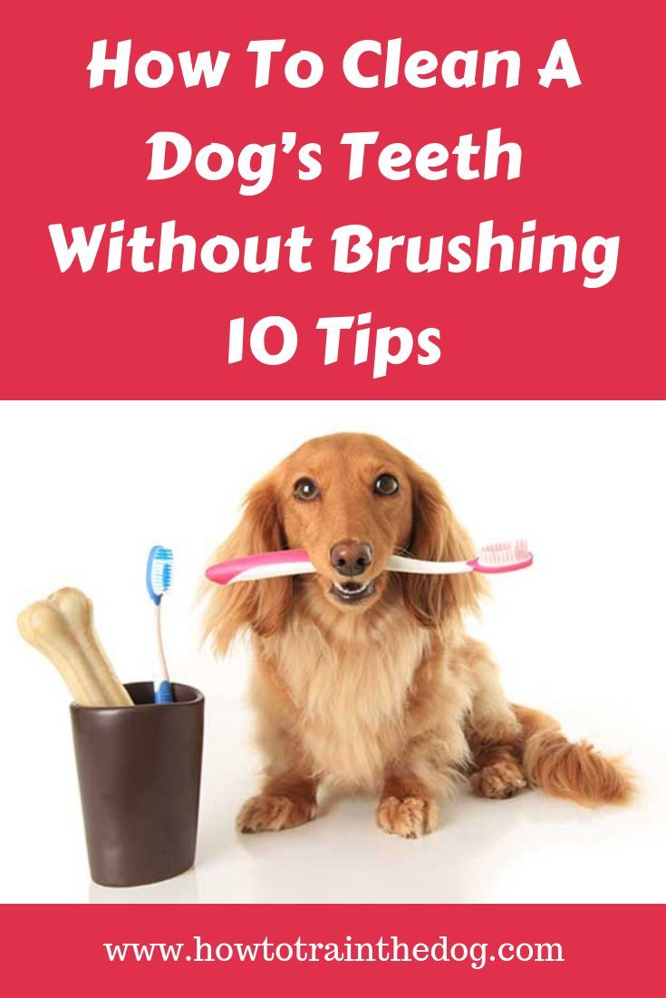 how to brush your dog's teeth without toothpaste