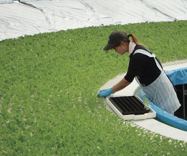 青森発「稼げる農業」のアイデア   月刊「事業構想」2014年7月号