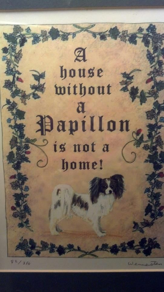 A house without a Papillon is not a home.