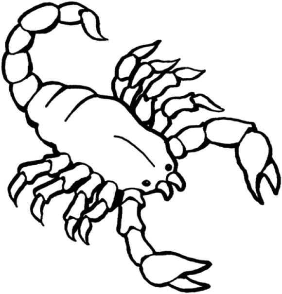 Scorpion Coloring Page Coloring Pages Easy Coloring Pages Cool