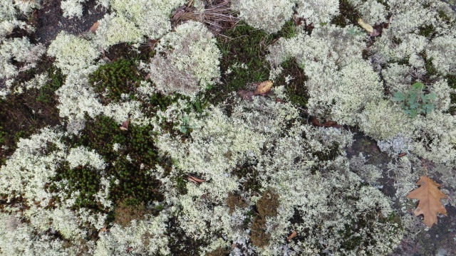 Lovely lichens (are they lichens?)
