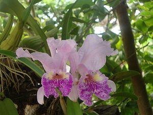 como cultivar y cuidar una orquídea en casa