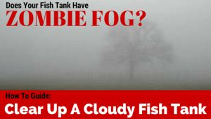 Guide how to clear up a cloudy fish tank fish fish for How to fix a cloudy fish tank