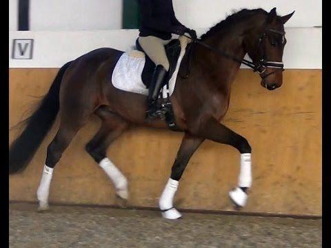 www.sporthorses-online.com 2011 Dressage gelding 16.3 hh interessting pr...