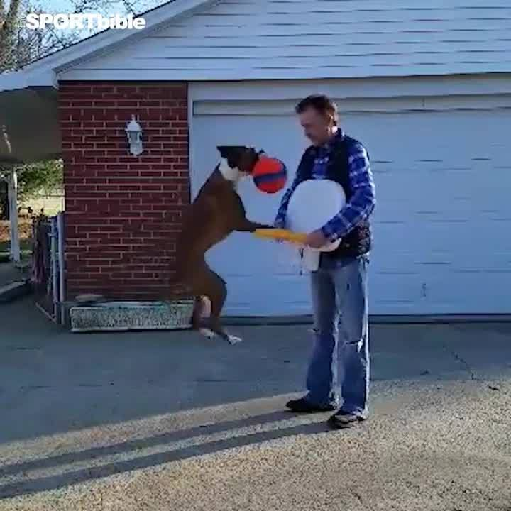 This dog scores baskets for fun...