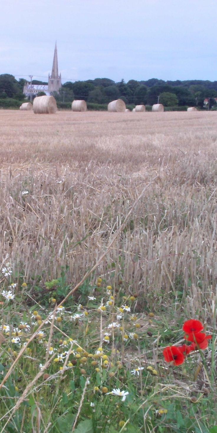 Harvest Cornfield Poppies and Church, Snettisham, Norfolk, England. Landscape, Summer, Fields, Photography.