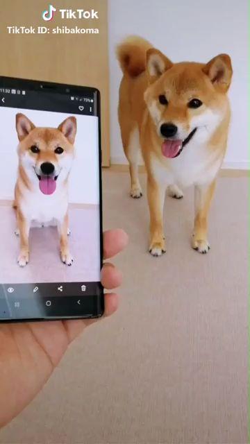 Un chien imite une photo
