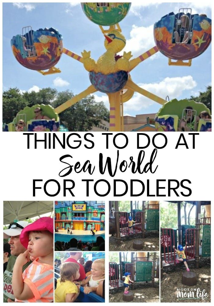 Things To Do At Seaworld For Toddlers San Antonio Things To Do Sea World Seaworld San Antonio