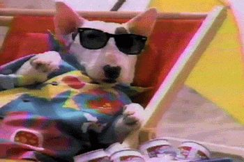 dog 80s commercial sunglasses spuds mackenzie trending #GIF on #Giphy via #IFTTT http://gph.is/28PzogP