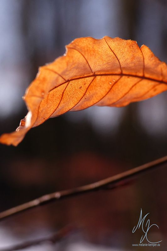 Autumn Leaves on a Winter's Day | Life is Beautiful! – Coaching, Blogging, Better Living