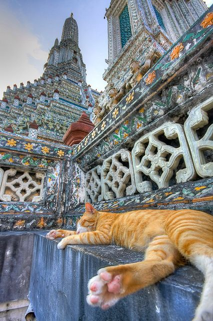 Wat Arun(The Temple of Dawn),Bangkok , Thailand - even cats need enlightenment