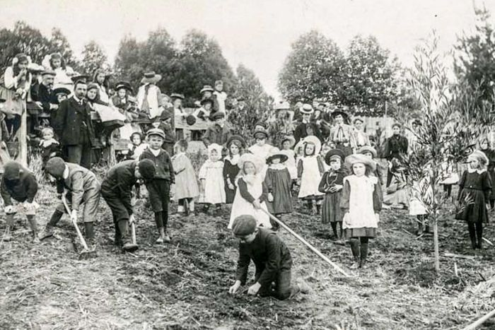 Students at Neerim South State School plant trees for Arbor Day, 1908. Photo Supplied By Public Record Office Victoria