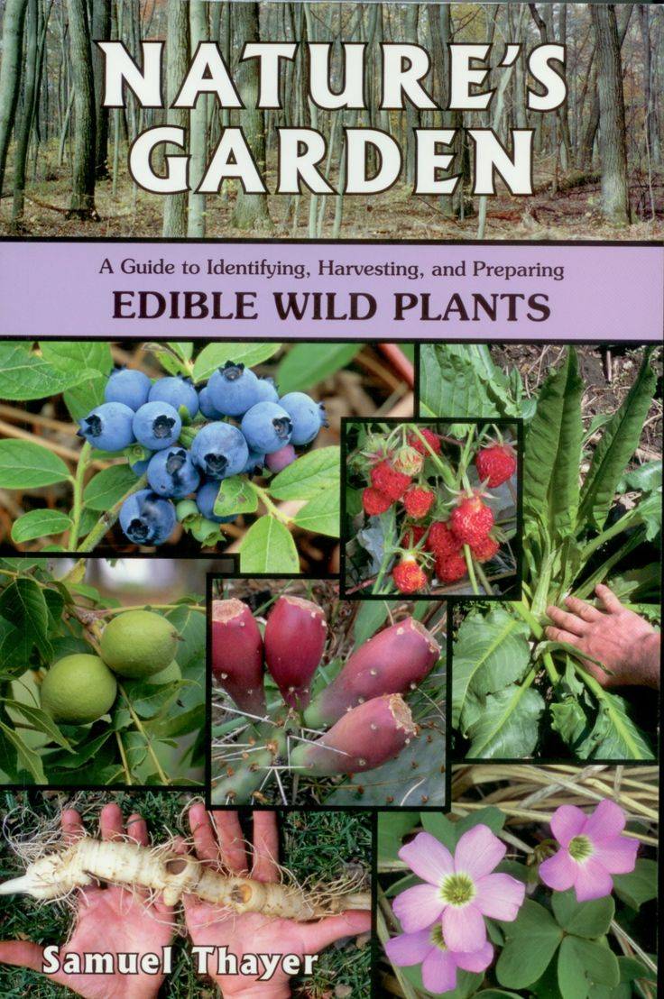 The spice doc edible and medicinal flowers - 96 Best Edible Wild Plants Images On Pinterest Wild Edibles Edible Plants And Emergency Preparedness