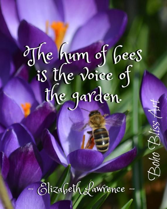 The hum of bees is the voice of the garden. Spring Quote Wall Art | Art Print Instant Download The hum of bees is the voice of the garden. Spring Quote Wall Art | Art Print Instant Download <a class=