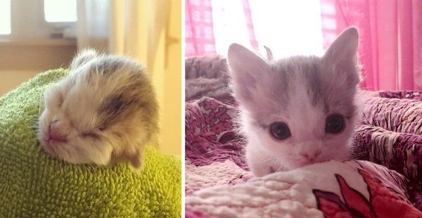 Kitten Abandoned At Birth Found Family That Saved Her Life Even Though Others Said She Might Not Survive Kitten Newborn Kittens Survival