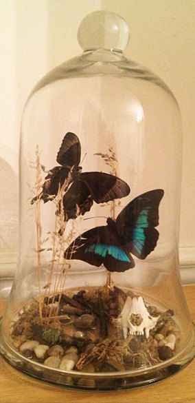 "Butterfly taxidermy features Bali and Peru butterfly species  in a river-bed scene. Large 14"" bell jar top"