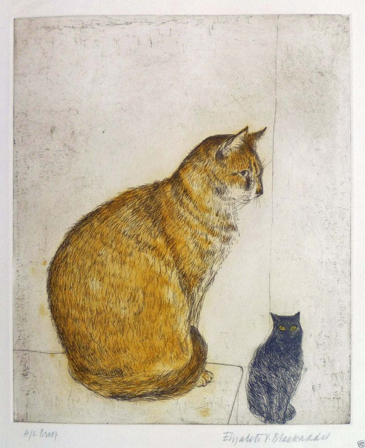 Elizabeth Blackadder (Scottish, b. 1931). Abyssinian Cat. 2003. Color etching and aquatint.