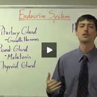 This lesson will define examine the function of a hormone and the glandswithin the endocrine system.