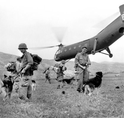 Dogs were used in Algeria to sniff enemy shelters and weapons stashes. Here some dogs of the 151st Infantry regiment are ready to go on a mission.